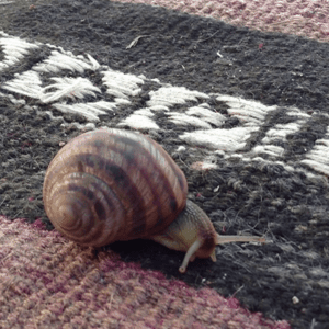 How To Remove Snail Trails From Your Carpet